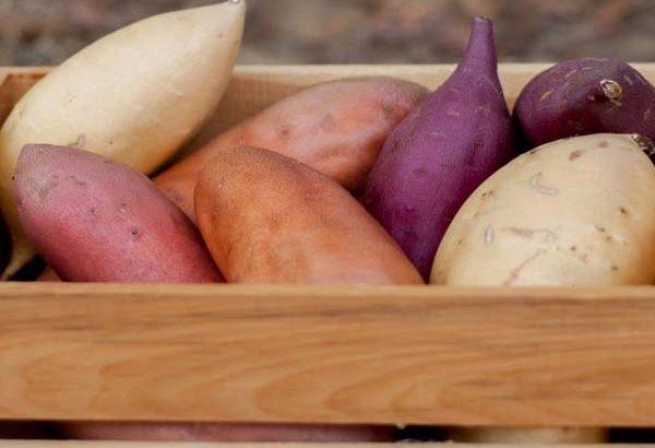 tiểu đường thai kỳ có được ăn khoai lang