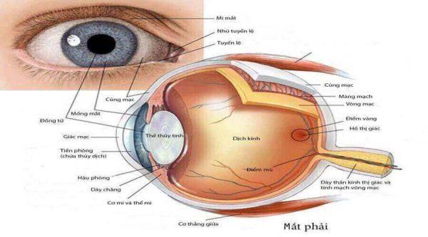 chăm sóc mắt ở người đái tháo đường