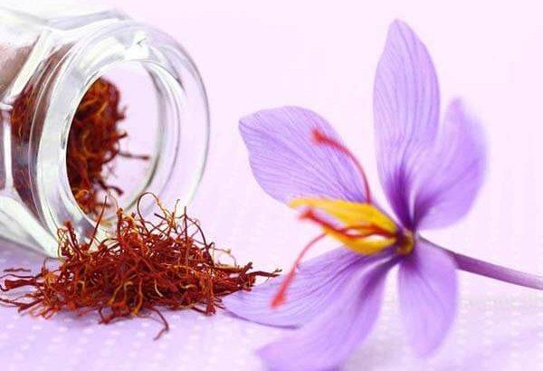 Có thể dùng saffron trị tiểu đường được hay không?