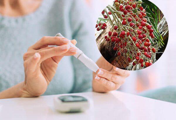 Chỉ bạn cách chữa bệnh tiểu đường bằng quả cau cảnh