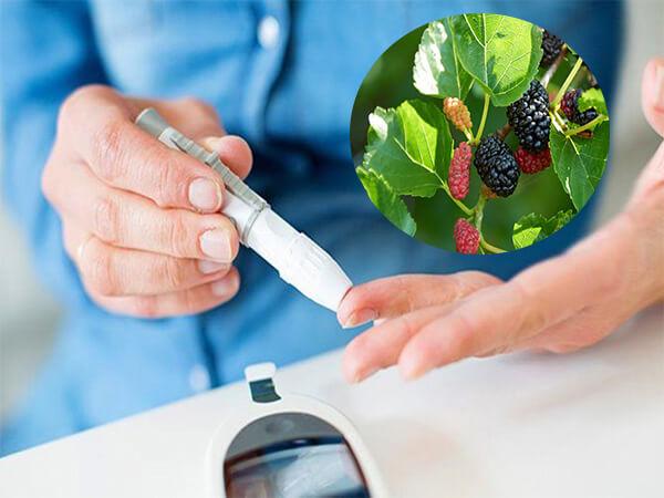 Tác dụng của lá dâu tằm đối với bệnh tiểu đường