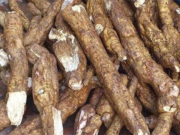 Sắn dây là nguyên liệu có trong món ăn bài thuốc cho người tiểu đường của bài thuốc số 4