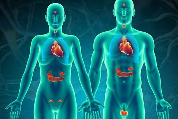 hệ thống nội tiết và bệnh tiểu đường
